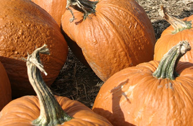 More Than Pie – Pumpkin Pie Trail September 21, 2013