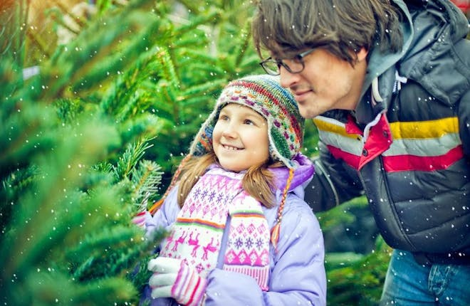 Best Christmas Trees in Central Counties