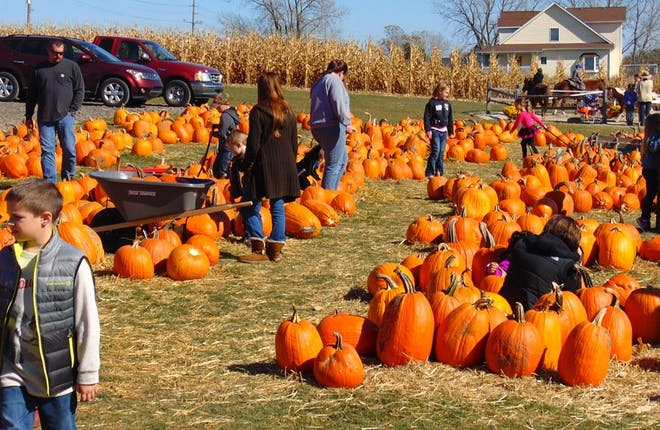 5 Family Fall Day Trips From Toronto