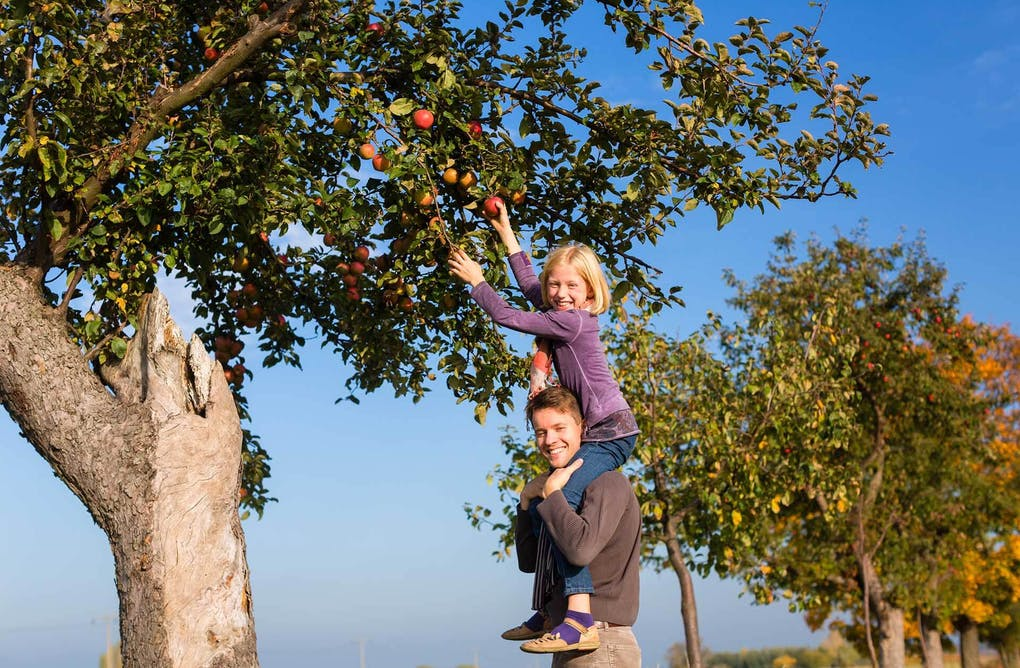 More than Just Apples – Fun at the Pick-Your-Own Apple Orchard
