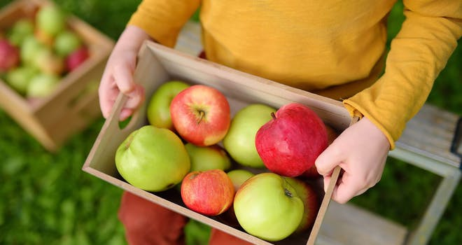 Unique Varieties and Farm-Fresh Flavours at the Pick-Your-Own Apple Orchard