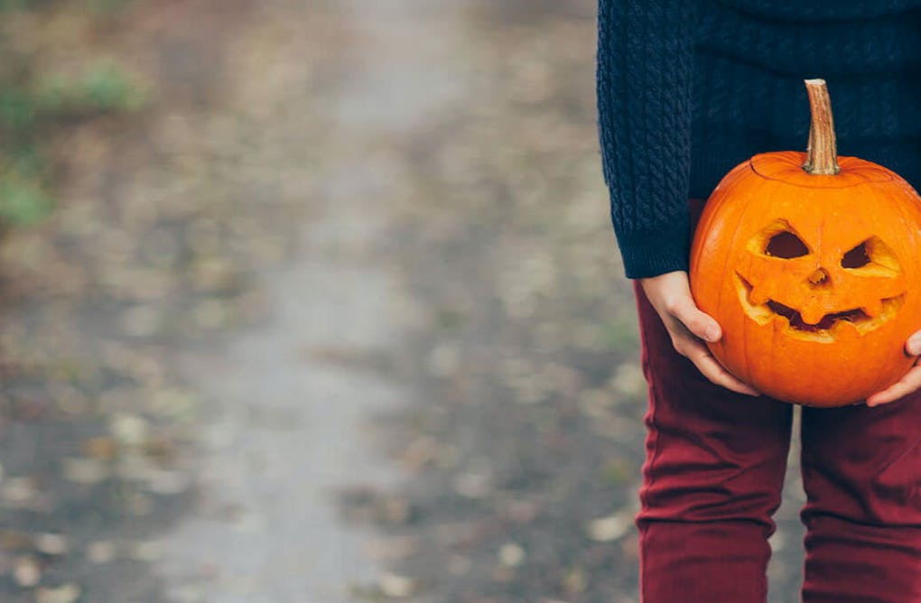 Do You Bert or Do You Ernie? A Guide to Your Perfect Pumpkin