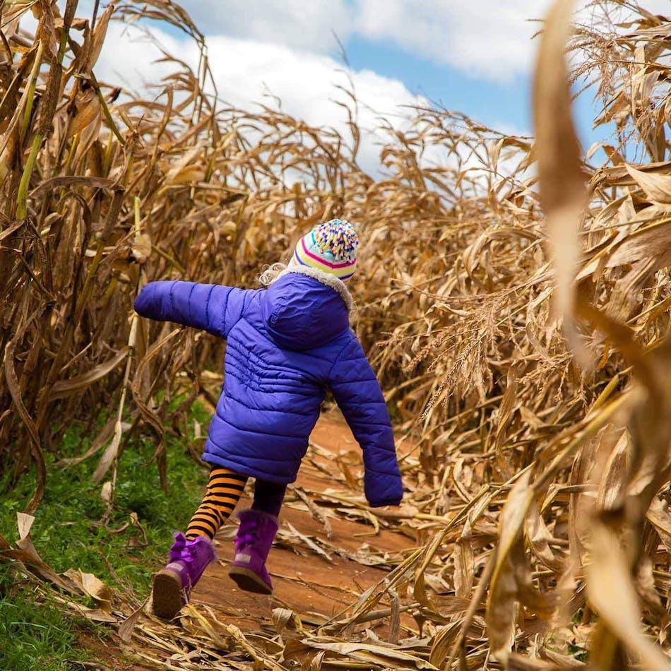 Cooper's Farm – Corn Maze