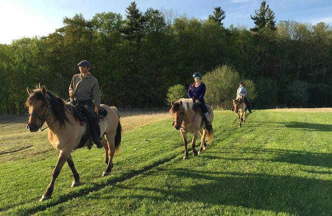 Horseback Riding Adventures in Ontario