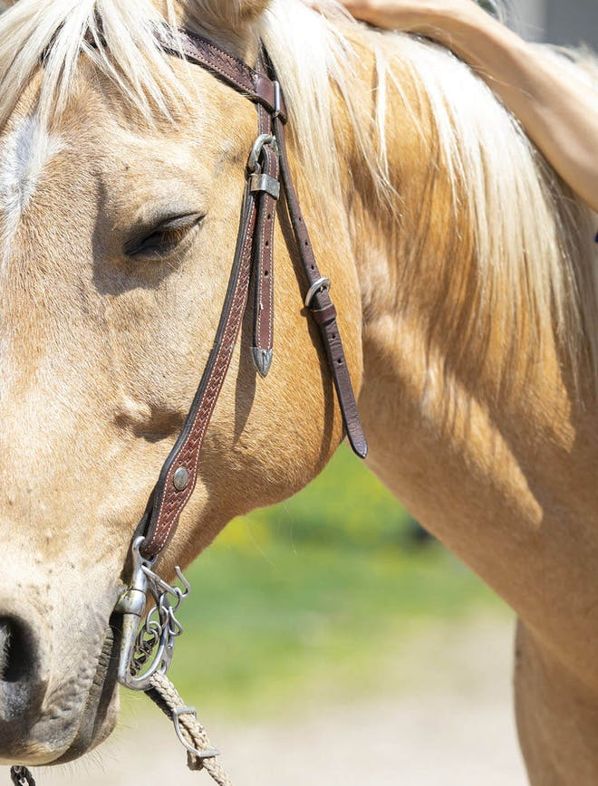 Farms & Barns in YDH   Animal Adventures in YDH