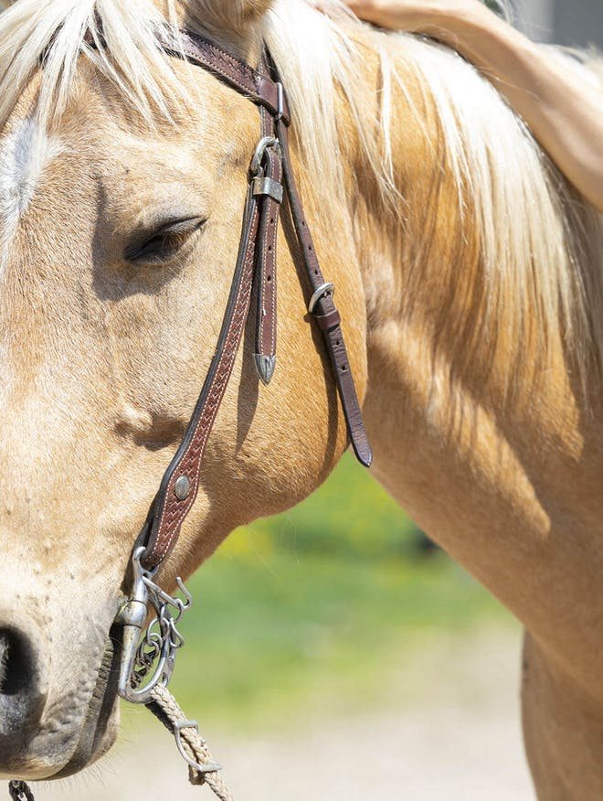 Farms & Barns in YDH | Animal Adventures in YDH