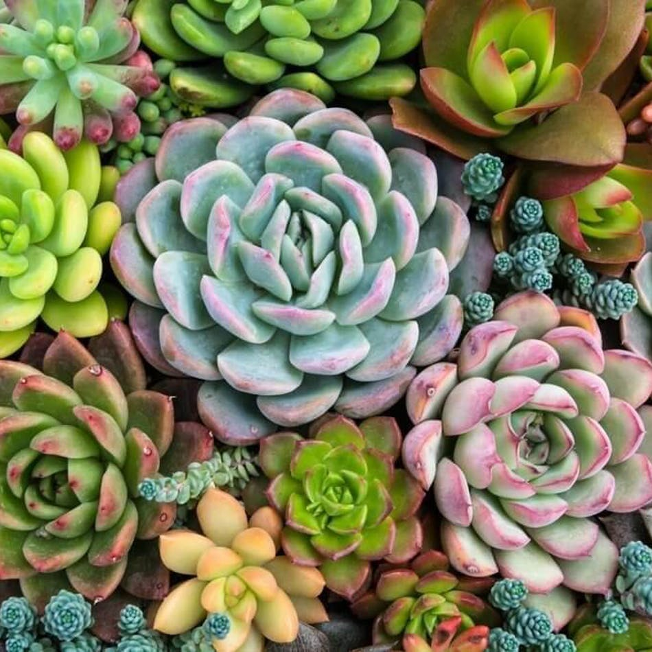 Take Home Succulent Workshops