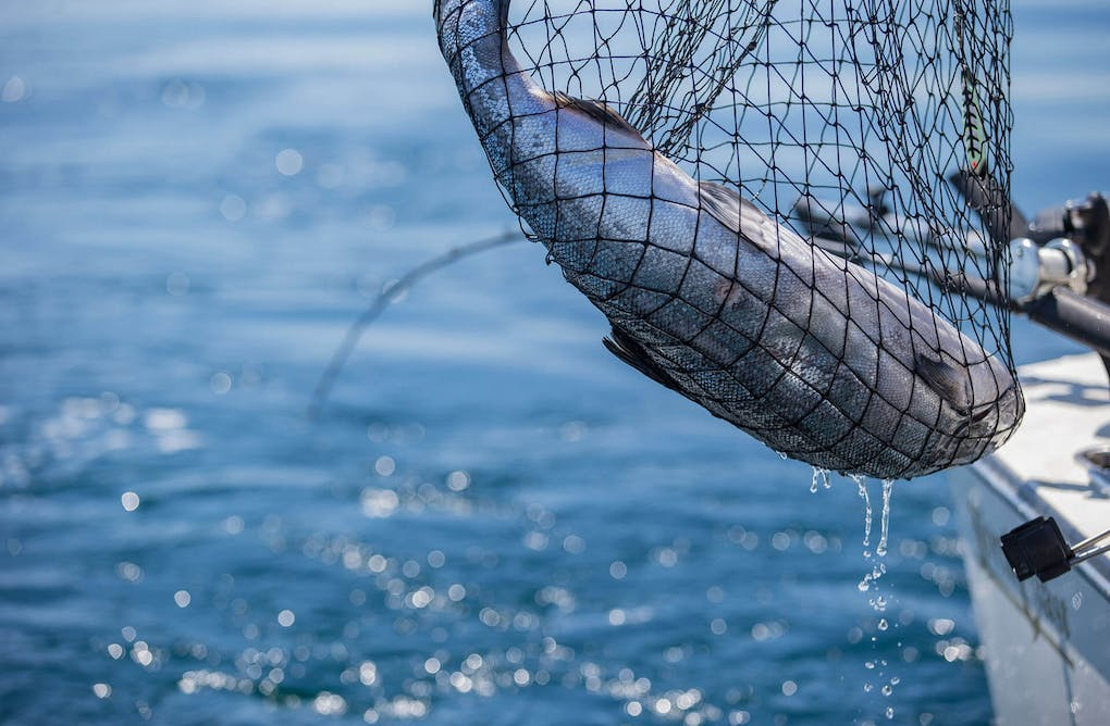 Sustainable Catch and Release Fishing Season Open In YDH