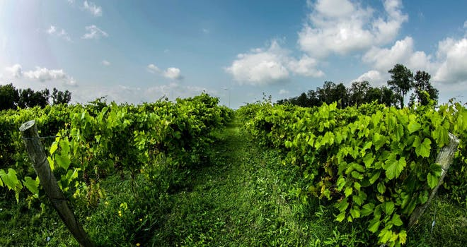 One Wine-derful Reason to Visit Stouffville, Ontario