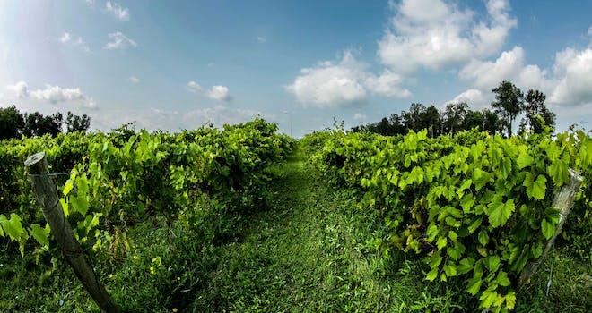 One Wine-derful Reason to Visit Stouffville, Ontario