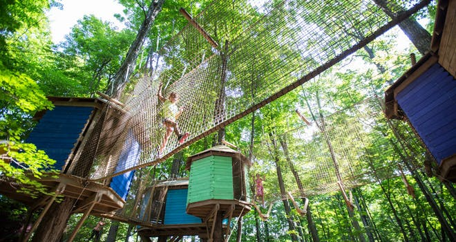 Make Like a Tree at Treetop Trekking