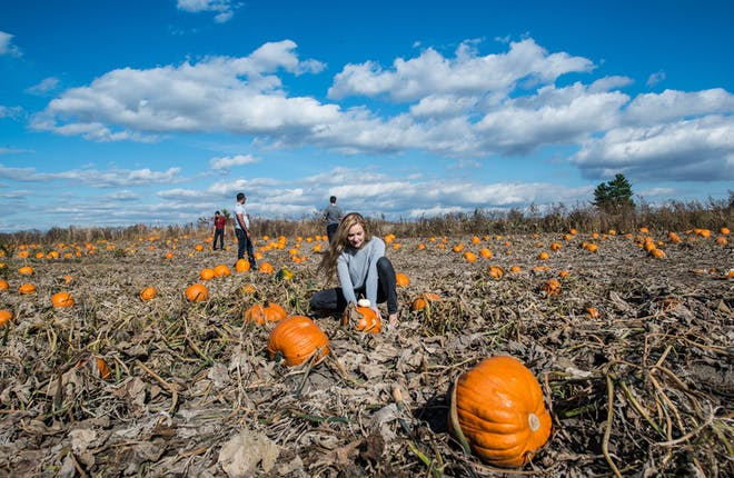 Find the Perfect Pumpkin Patch and Farm in YDH