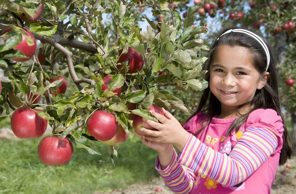 Tips for Visiting a Farm or Orchard Responsibly