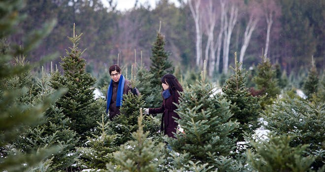 Harvest Your Own Christmas Tree in YDH