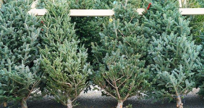 Oh, Christmas Tree