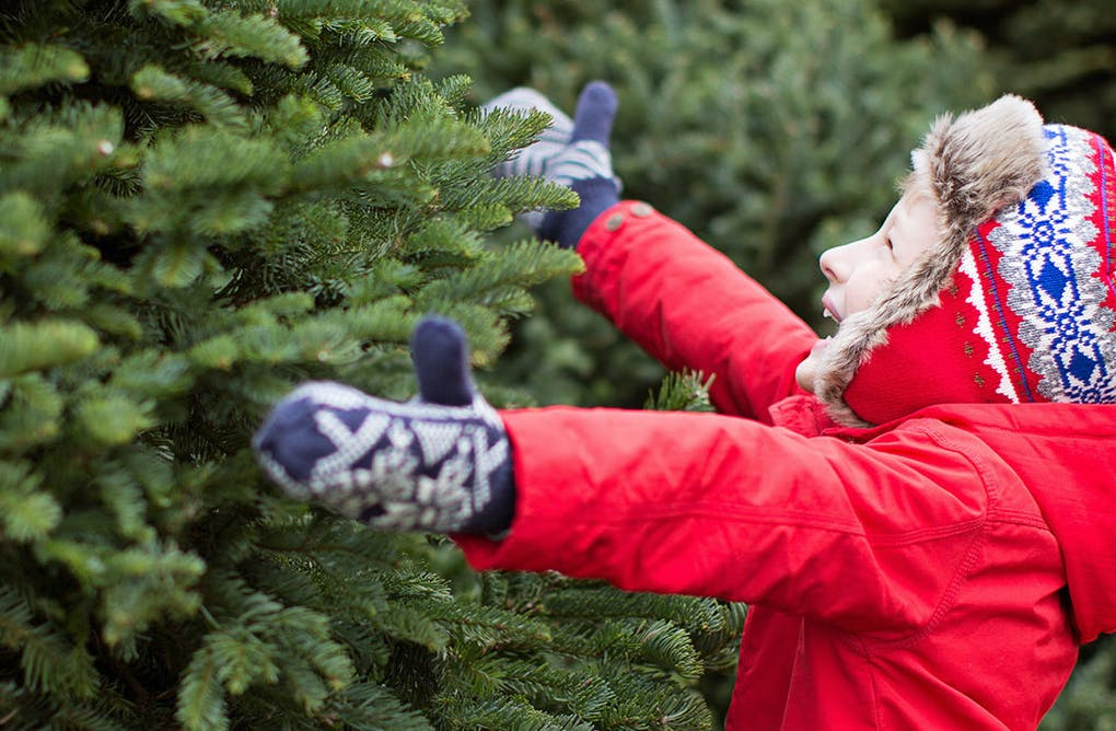 Tree Toppling and Toasty Treats
