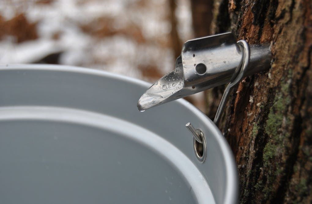 Maple syrup festivals a short drive from Toronto, Ontario